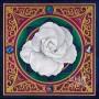 white rose in mandala